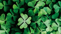 Playlist: Rocking out with St. Patrick